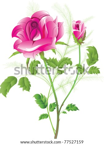 Vector image of a flowering pink rose with a bud - stock vector