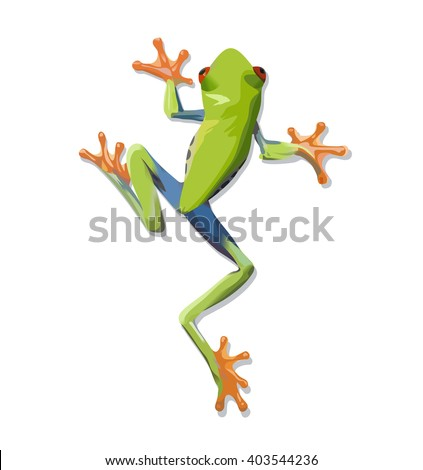 Vector image of a green tree-frog on white background. Vector 10 EPS. - stock vector