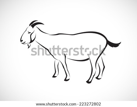 Vector image of an goat on white background - stock vector