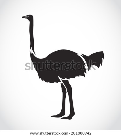 Vector image of an ostrich on white background - stock vector