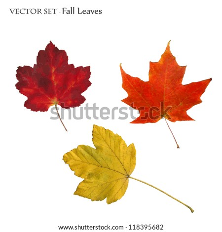 Vector image of colorful fall leaves isolated on a white background. - stock vector