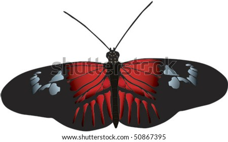 Vector image of Postman butterfly of Ecuador. Available as raster image - stock vector