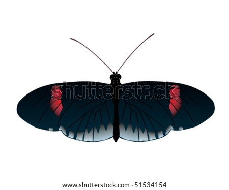 Vector image of Postman butterfly of Ecuador. Raster image also available