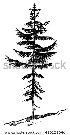 Vector image of the hand of a young pine, spruce . - stock vector