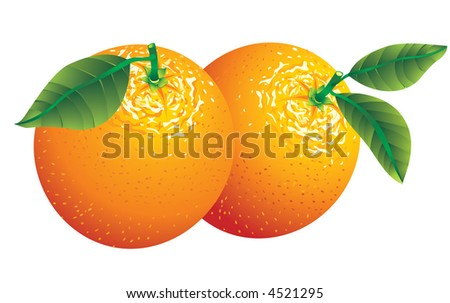 Vector image of two oranges