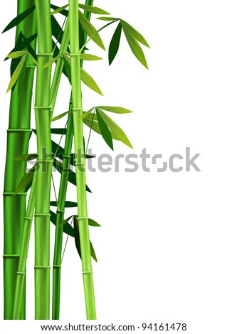 Vector images of stalks of bamboo on white background - stock vector