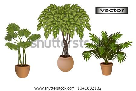 Vector Indoor Green Plants On Floor Stock Vector (Royalty Free ...