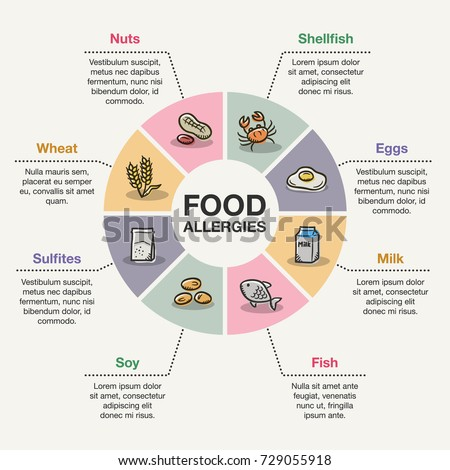 vector infographic template food allergies stock vector royalty