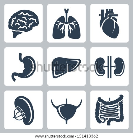 Vector internal organs icons set - stock vector