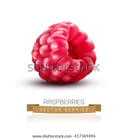 vector isolated raspberries on a white background - stock vector
