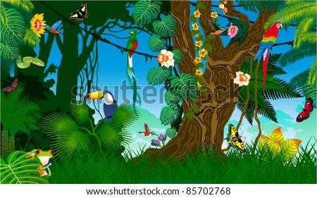 Vector Jungle with Frog, Toucan, quetzal, humming-birds, butterflies , Ara and Green Snake - stock vector