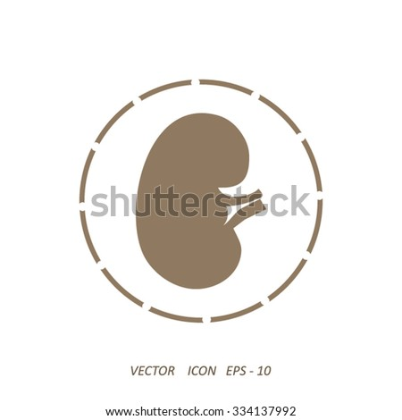 Vector kidney icon.