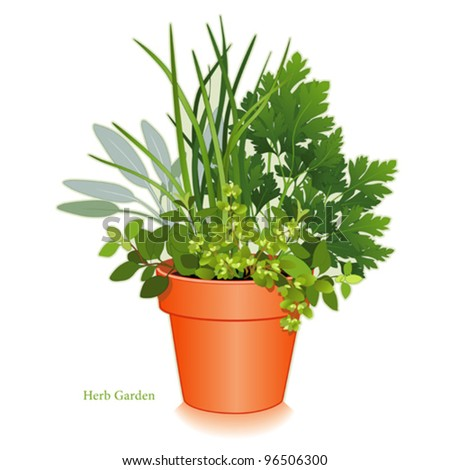 vector - Kitchen Herb Garden, Clay Flowerpot Planter. For cooking: left-right: Italian Oregano, Sage, Chives, Flat Leaf Parsley, Sweet Marjoram. EPS8 compatible. See other herbs in this series. - stock vector