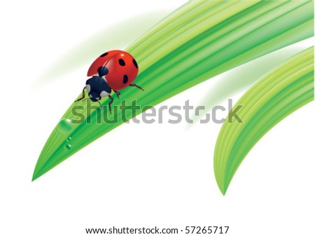 Vector. Ladybird on grass with water drops. - stock vector
