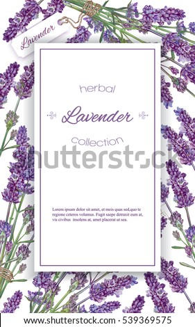 vector lavender flower elegant banner on stock vector