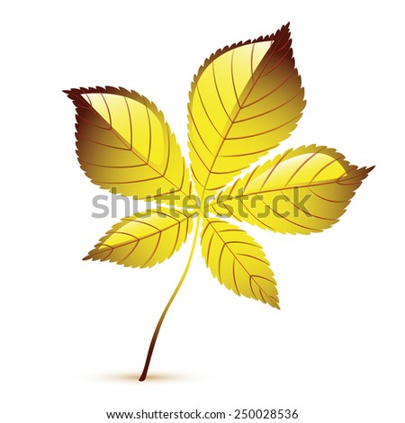 Vector leaf - stock vector