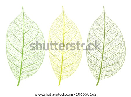 Vector leaf on white background - stock vector