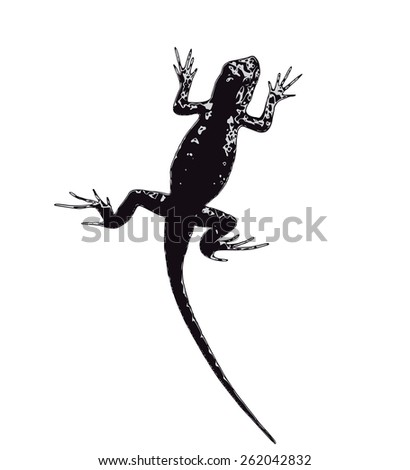 Vector lizard silhouette isolated on white background