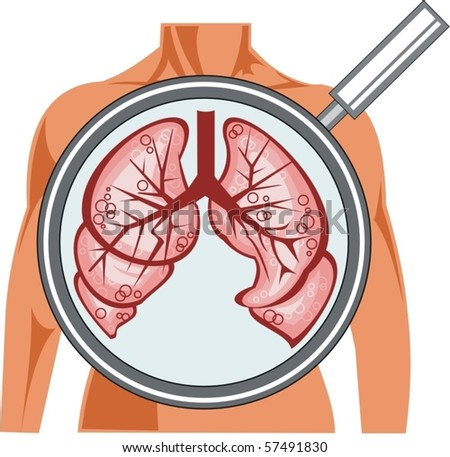 vector lungs - stock vector