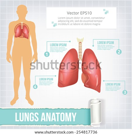 Vector lungs infographics banner illustration - stock vector