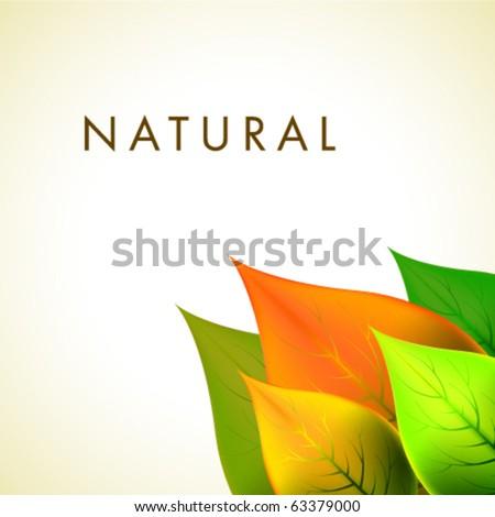 Vector Natural Design - stock vector