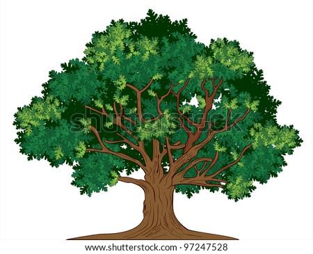 Vector oak tree - stock vector