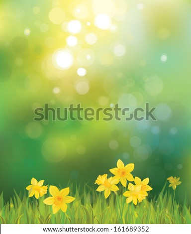 Vector of daffodil flowers on spring background. - stock vector