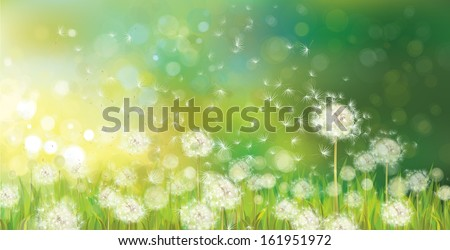 Vector of spring background with white dandelions.  - stock vector