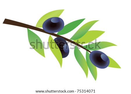 vector olive branch with olives - stock vector