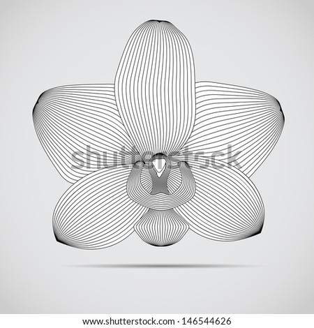 Vector orchid flower. Illustration for your design.