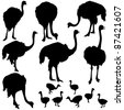 Vector Ostrich Silhouettes - stock