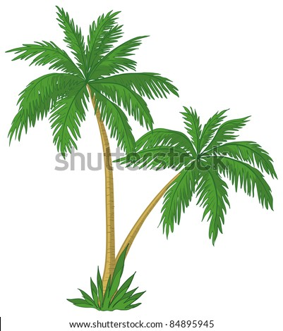 Vector, palm trees with green leaves on white background - stock vector
