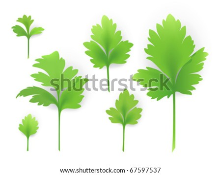 Vector parsley leaves. Created using gradient meshes.