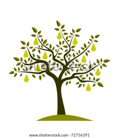 vector pear tree on white background - stock vector