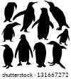 Vector penguins silhouette - stock photo