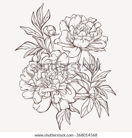 flower vase tattoo meaning with Vector Peony Flower Isolated On White 368014568 on 452259987555996778 moreover Carving Roman Acanthus 4 moreover Vector Peony Flower Isolated On White 368014568 also Ewrahphoto How To Draw A Easy Tulip moreover Flower Vase Outline Drawing Luxury Flower Pot Outline Cliparts.