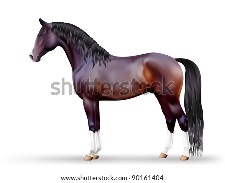 Vector photo-realistic beautiful brown horse - stock vector