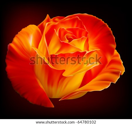 Vector photo-realistic beautiful fiery rose on a black background - stock vector