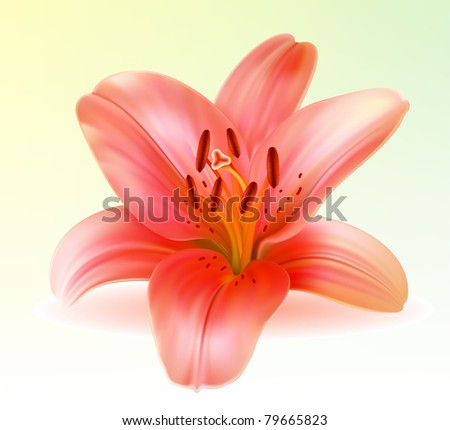 Vector photo-realistic beautiful pink lily - stock vector
