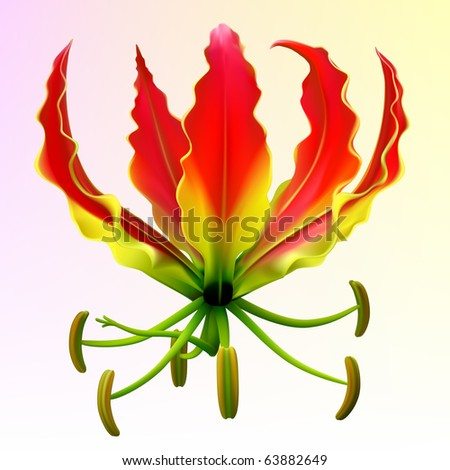 Vector photo-realistic gloriosa flower - stock vector