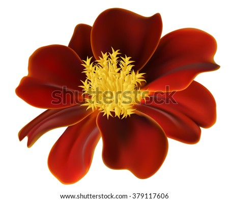 Vector photo realistic marigold flower - stock vector