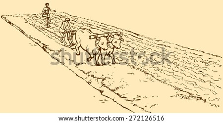 Vector picture. Primitive agriculture ancient Asian and African world: Egypt, Assyria, Babylon, India, China. One farmer plows the land plot pulled on a pair of oxen. Second sows grain plowed field - stock vector