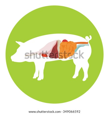 Vector Pig Anatomy Digestive System Pig Stock Vector 349066592 ...