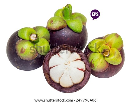 Vector pile of fresh mangosteen isolated on white background.The Queen of fruits - stock vector