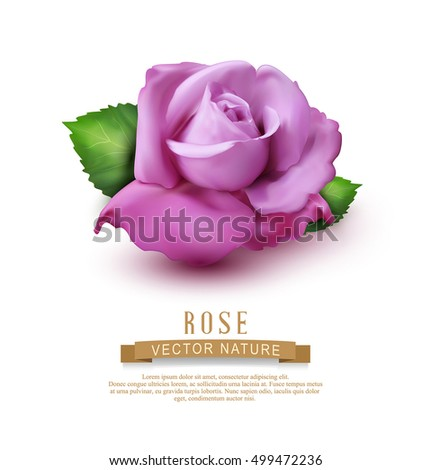 Vector pink rose with leaves isolated on white background. Element for design .