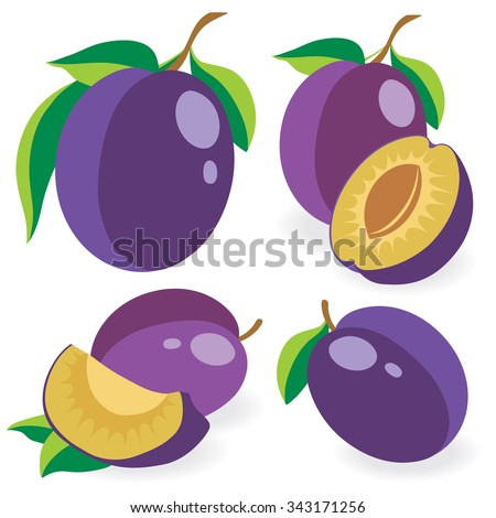 Vector plums. Collection of whole and cut blue plum fruits isolated on white background, vector illustrations - stock vector