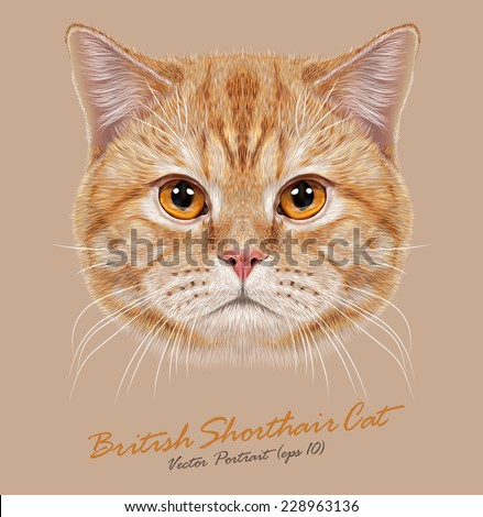 Vector Portrait of Domestic Cat. Orange British  Short hair cat with copper eyes. - stock vector
