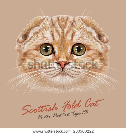 Vector Portrait of Scottish Fold Cat. Young cute cat peach colored cat with green eyes. Pedigreed cat. - stock vector