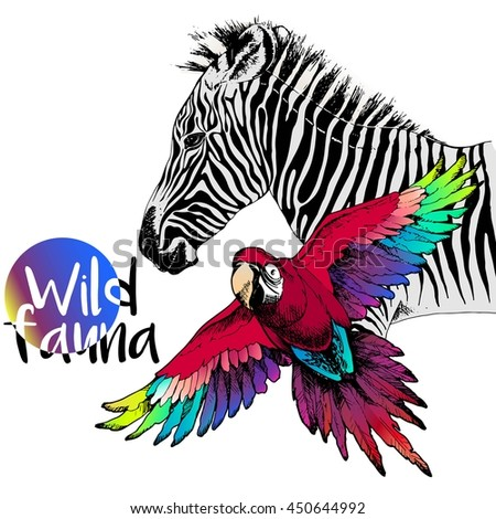 Vector portrait of zebra and ara macaw parrot. Wild african animals collection. Engraved color hand drawn style. - stock vector