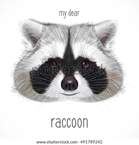 Raccoon Stock Photos, Royalty-Free Images & Vectors ... Raccoon Face Illustration